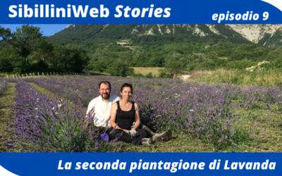 Ep.9 – SibilliniWeb Story – La nostra seconda piantagione di Lavanda