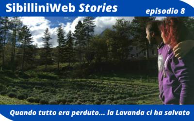 Ep.8 – SibilliniWeb Story – Quando tutto era perduto… la Lavanda ci ha salvato